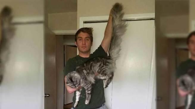 Gato con la cola más larga del mundo entra al libro de Guinness Record