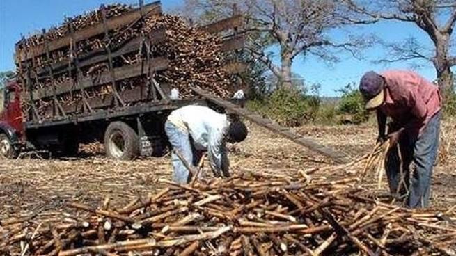 Gobierno pondrá en subasta varios ingenios azucareros para pagar pensiones