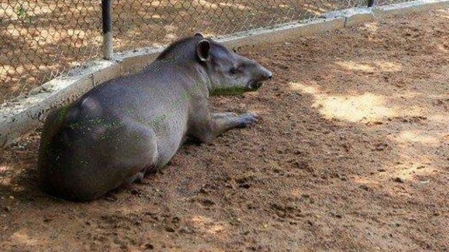 Animales robados en un zoológico de Venezuela serían consumidos como alimento