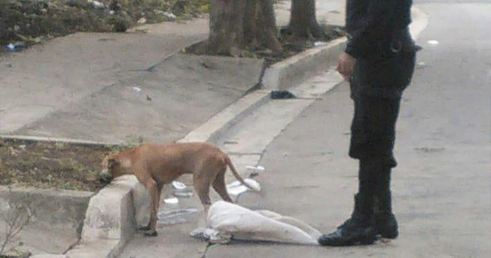 PNC rescata a perro que se encontraba amordazado dentro de un saco en Sonsonate