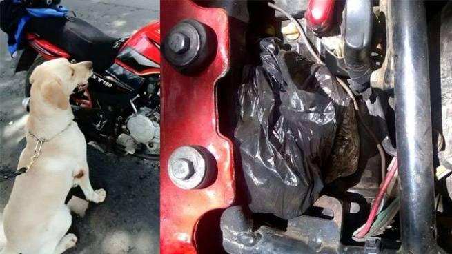 Perro policía encuentra droga en una motocicleta durante un operativo en Santa Ana
