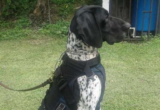 """El Agente canino """"FURST"""" localiza restos humanos en fosa clandestina"""
