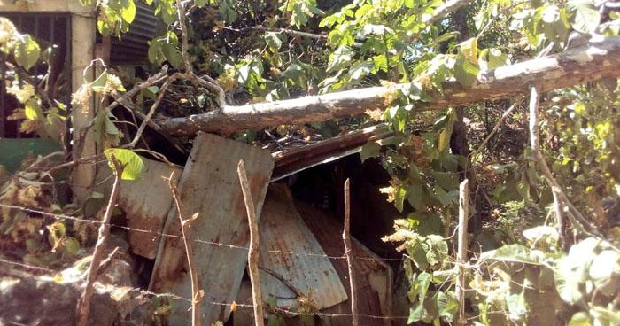 Árbol cae sobre una vivienda mientras sus habitantes dormían