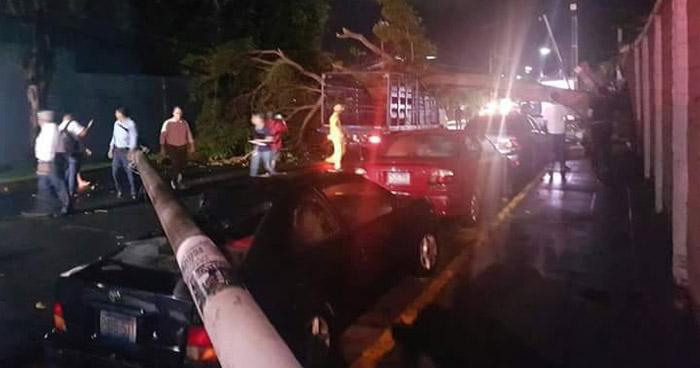 Cuatro personas resultaron lesionadas tras caída de un árbol en Antiguo Cuscatlan
