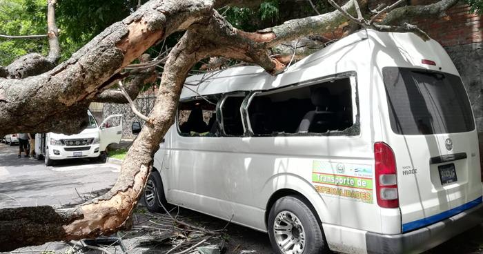 Árbol cayó sobre un microbús estacionado en calle Arce de San Salvador