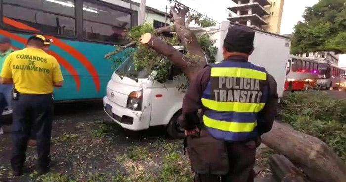 Árbol cae sobre camión en el centro de San Salvador