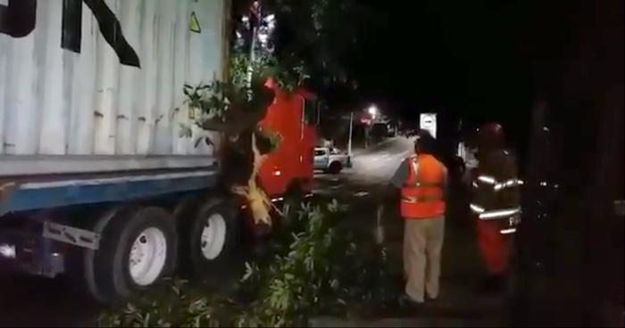 Árbol cayó sobre un furgón cuando transitaba sobre la 25 avenida Sur de San Salvador