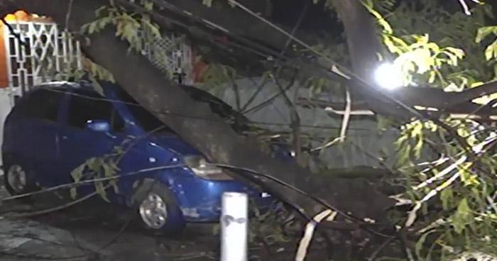 Caen ramas de un álbol y daña tres vehículos y una vivienda en Soyapango