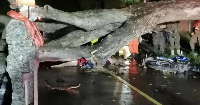 Árbol cae y mata a motociclista sobre carretera de San Miguel