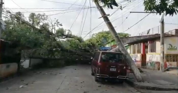 Árbol cayó anoche tras fuerte lluvia y dejó sin energía a un mercado de Ilopango
