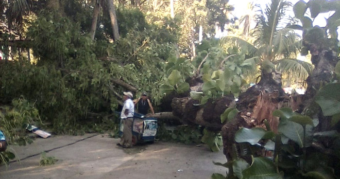 Niña de 2 años lesionada al caer un árbol en turicentro de San Vicente