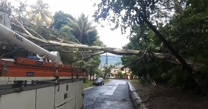 Árbol cae debido a lluvias y deja sin electricidad a residenciales de San Salvador