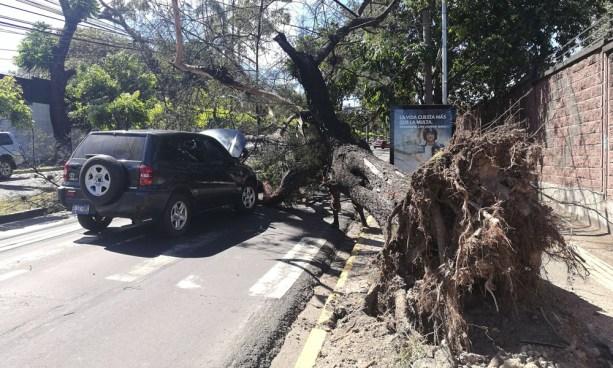 Paso cerrado en Alameda Manuel Enrique Araujo por árbol caído