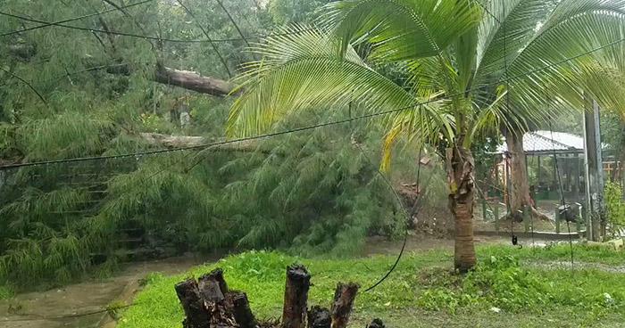 Calles inundadas y árboles caídos deja breve lluvia esta tarde de miércoles