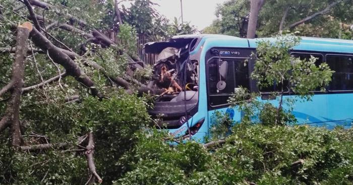 Autobús choca contra un árbol que había caído sobre carretera de Oro en Soyapango