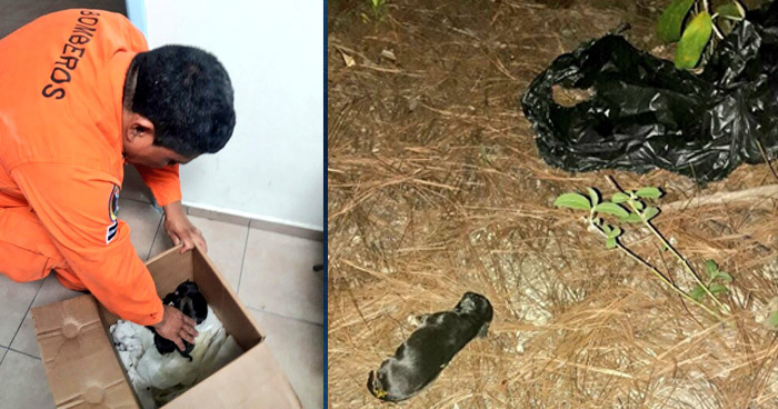 Bomberos rescatan a cachorros que habían sido abandonados para que se quemaran en incendio