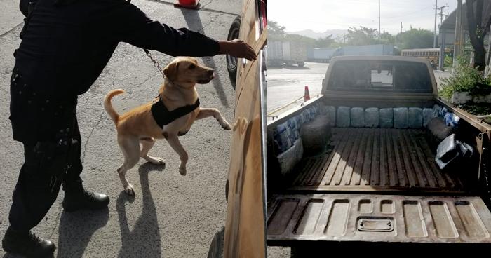 Oficial canino descubre cargamento de droga oculto en un vehículo en Frontera La Hachadura