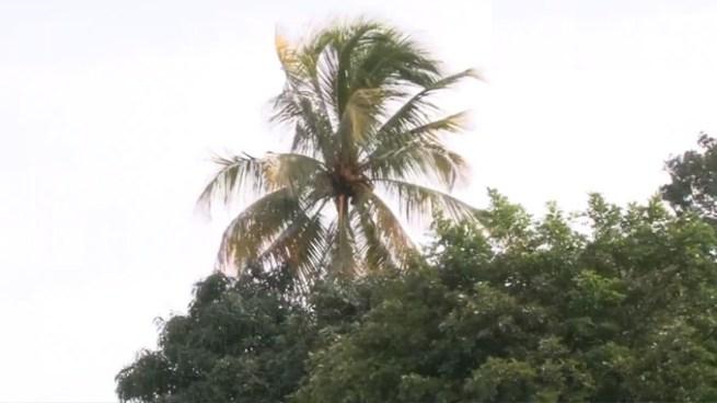 Continuarán vientos Nortes débiles más sensibles en zonas altas del país