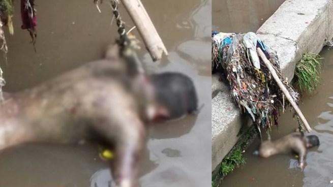 Encuentran cadáver con alambre de púas en el cuello en quebrada en San Salvador