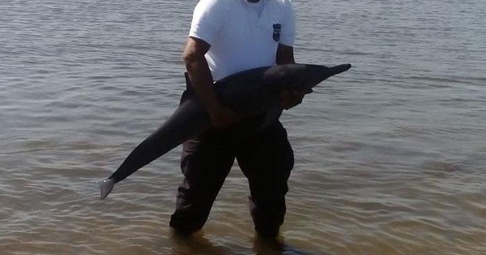 Atienden a un delfín lesionado en Playa Las Tunas de La Unión