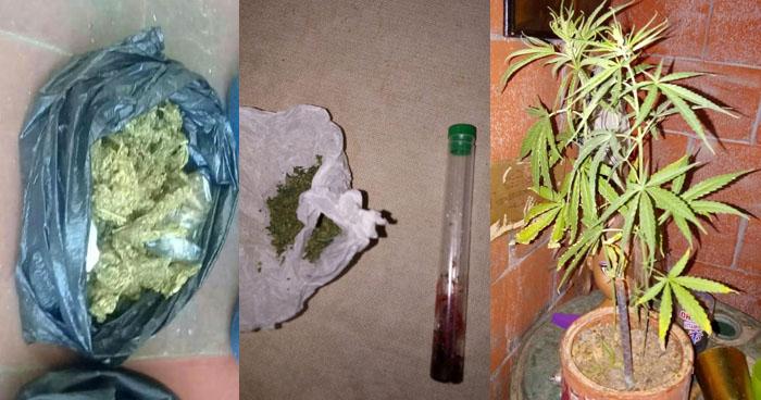 Incautan planta, semillas y porciones de marihuana en diferentes procedimientos