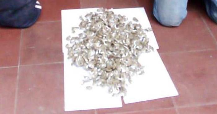 Incautan 400 porciones de marihuana en Soyapango