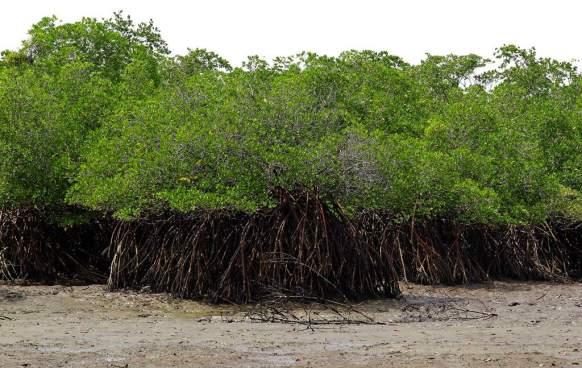 Pandilleros salvadoreños huyen a manglares en territorio de Honduras