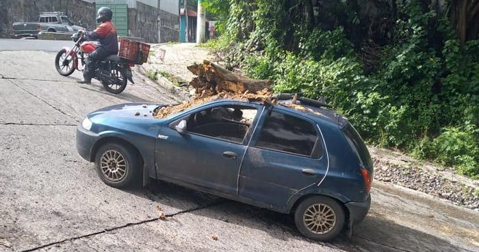 Rama de un árbol cae sobre un vehículo en alrededores del ex cuartel El Zapote