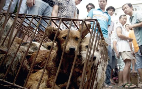 Periódico hondureño asegura que una empresa salvadoreña vende carne de perro a restaurantes chinos