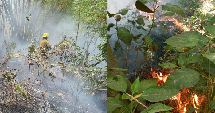 Controlan incendio en Cordillera del Bálsamo
