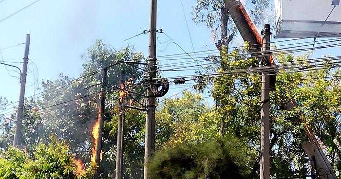 Incendio en cables de electricidad se generó tras la caída de una palmera