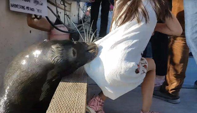 VIDEO | León marino ataca a una niña y la arrastra al agua en un muelle
