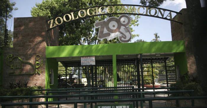 Mapache muere en el Parque Zoológico Nacional