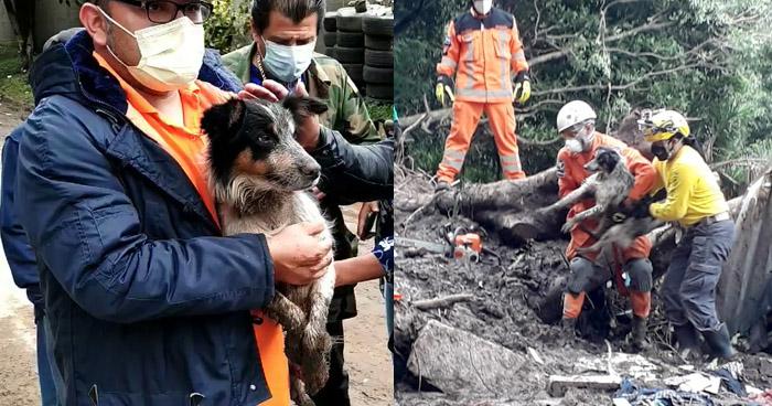 Encuentran con vida a mascota de la familia soterrada en Santo Tomás