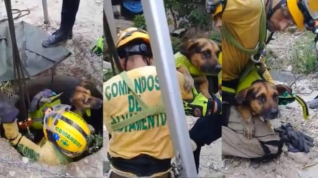 Rescatan a un perro que tenían tres días de estar atrapado en tuberías de aguas negras