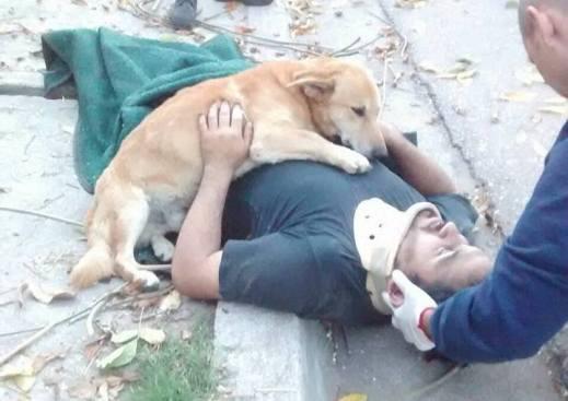 Perro acompaño a su amo herido hasta que llegó una ambulancia