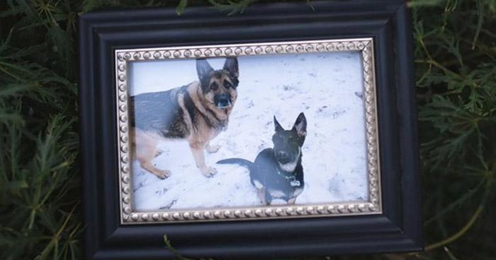 Muere en EE.UU. el primer perro diagnosticado con COVID-19