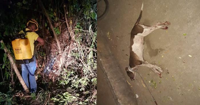 Enjambre de abejas mata a un perro y picó a 7 personas más en Mercedes Umaña, Usulután