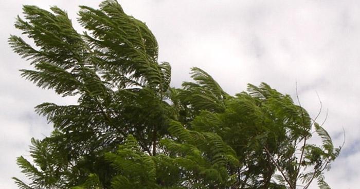 Vientos Nortes continuarán con énfasis en la franja central y norte del país