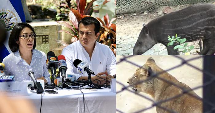 Confirman la muerte de un tapir y una leona del Parque Zoológico Nacional