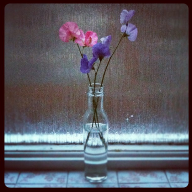 Sweetpea Instagram photo Copyright Solopress 2012