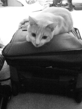 My Cat Knows I'm Going to be Traveling