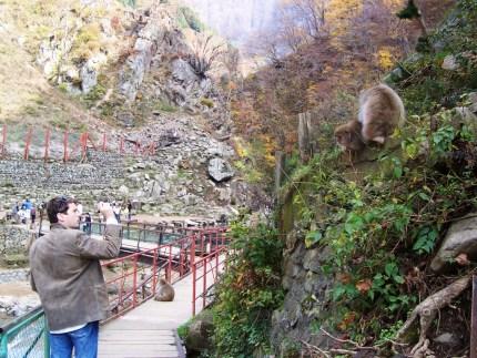 Monkeys Pose for Matt