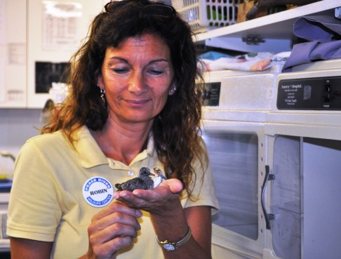 Dr. Robin Jenkins Holds an Orphaned Brown Dove, Peace River Wildlife Center, Punta Gorda, Fla.