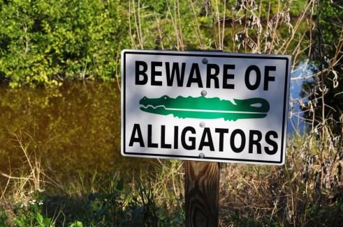 Beware, Wildflower Preserve, Cape Haze, Fla., Dec. 3, 2011