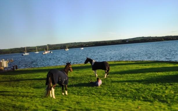 Irish Travellers and Horses for Harness Racing, Tarbert, Ireland, Oct. 2013