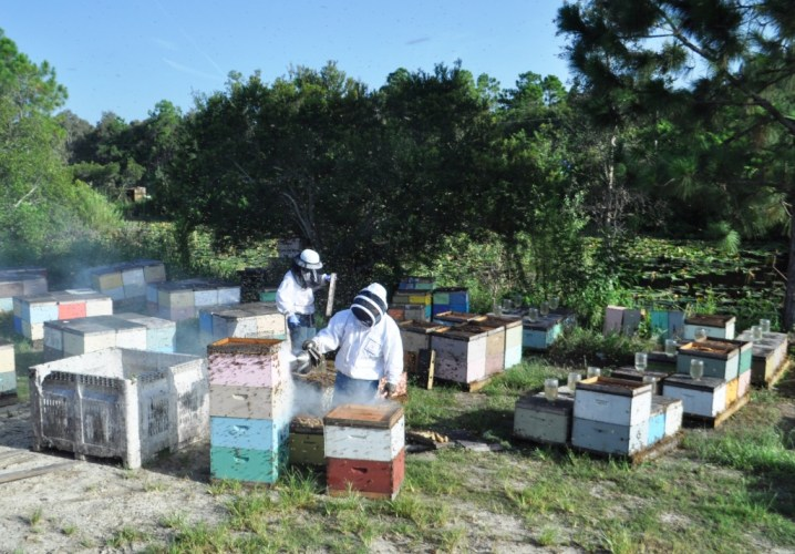 Workers Getting Ready to Harvest Honey from these Bee Hives