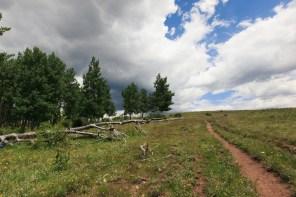 Wildflowers and treeline on Hamilton Mesa Trailhead