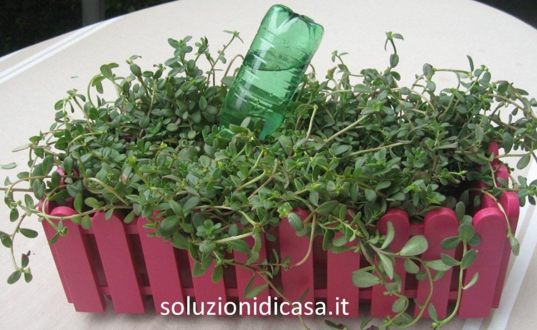 Capovolgi le bottiglie nelle piante