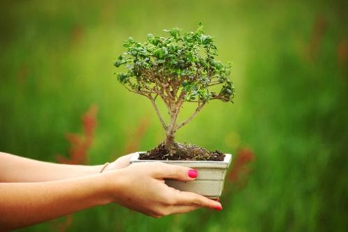 Come curare il bonsai